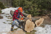 Cutting wood — Stock Photo