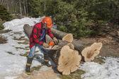 Cutting wood — Stock Photo