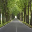 Stock Photo: Tree lined country road