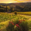 Vineyards of Tuscany at sunset — Stock Photo