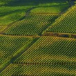 Stock Photo: Vineyards in Tuscany, Italy