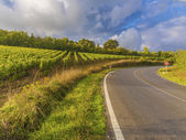 Vineyards in a Tuscan road bend — Stock Photo