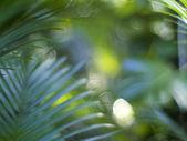 Gröna blad bakgrund — Stockfoto