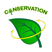 Leaf Conservation Represents Go Green And Conserving — Stock Photo
