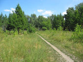 Path in a summer park. Landscape. — Stock Photo
