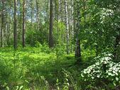 Mischwald. sommerlandschaft — Stockfoto