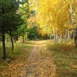 Gold autumn landscape - path in a mixed forest — Stock Photo