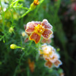 ストック写真: Frosty flower. Autumn