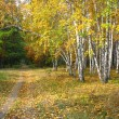 Gold autumn landscape - path in a mixed forest — Stock Photo #35736331