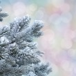 Frosty pine twigs against abstract pastel bokeh background — Stock Photo