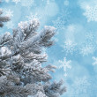 Frosty pine twigs against blue background with snowflakes — Stock Photo