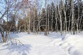 Winter landscape. Mixed forest — Foto de Stock