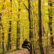 Autumnal photo in a forest — Stockfoto