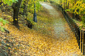 Autumnal photo in a forest — Stock Photo