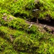 Moss on tree trunk — Stock Photo