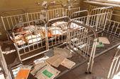 Abandoned nursery at Chernobyl — Stock Photo