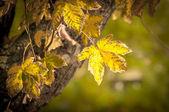 Zbliżenie niektórych jesiennych liści — Zdjęcie stockowe