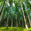 Stock Photo: Bright forest angle shot