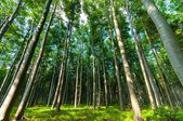 Bright forest angle shot — Stock Photo