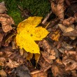 Closeup of some autumnal leaves — Stockfoto