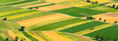 Green fields aerial view — Stock Photo