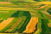 Duże pole gotowe do zbiorów — Zdjęcie stockowe