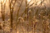 森の秋の写真 — ストック写真