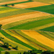 Stock Photo: Aerial view of green fields