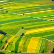 Green fields aerial view before harvest — Stock Photo #19646081