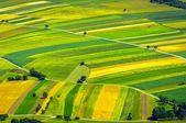 Widok z lotu ptaka zielonych pól przed zbiorem — Zdjęcie stockowe