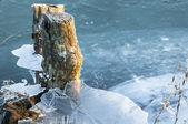 Tronco d'albero congelato nel ghiaccio — Foto Stock
