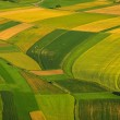 Green fields aerial view before harvest — Stock Photo #19682165