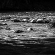 Fast mountain river in black and white — Stock Photo