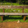 Stock Photo: Wooden bench without