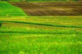 Campos verdes con pasto verde — Foto de Stock