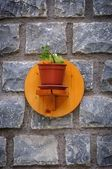 Little plant on the wall — Stock Photo