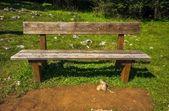 деревянная скамейка без — Стоковое фото