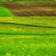 Green fields with green grass — Stock Photo