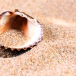 Sea shell in soft sand — Stockfoto