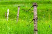 Kleine zaun für die tiere — Stockfoto