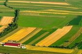 Green fields aerial view before harvest — Stock Photo