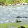 Water flowing in river — Stock Video