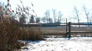 农村现场与植物在冬季 — 图库视频影像
