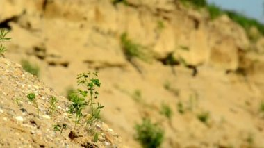 Small little plant blown by the wind — Vídeo de stock