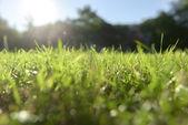 Fressh green Grass outdoors — Stock Photo