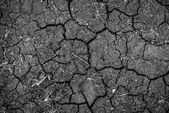 Closeup of dry soil texture — Stock Photo