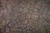 Gros plan de la texture du sol sec — Photo