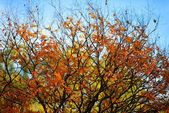 Upper part of an autumnal tree — Stock Photo