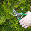 Hands are cut bush clippers — Stock Photo #12600286