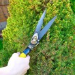 Stock Photo: Hands are cut bush clippers
